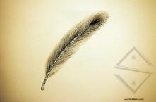 feathersm